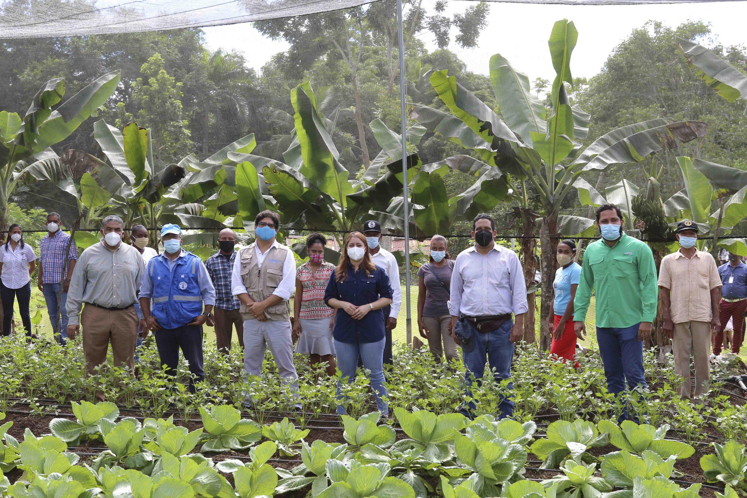 En La Casa Sombra , La Maya de Yamasá se está cultivando apio, lechuga y repollo y otros, esta producción esperan pueda ser comercializada